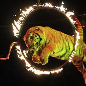 Цирки Новосибирска