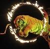 Цирки в Новосибирске
