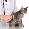 Ветеринарные клиники в Новосибирске